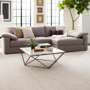 Perfect carpet in living rooms | Shoreline Flooring